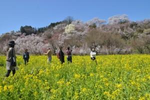 花見山の様子
